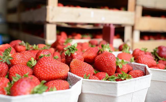 Regionale Produkte wie Erdbeeren und Spargel aus Münster von Bäcker's Erdbeer- und Spargelhof