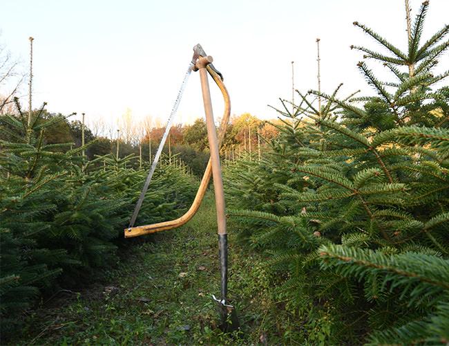 Weihnachtsbäume zum selber schlagen oder ausgraben in Münster auf Bäcker's Weihnachtsbaumplantage